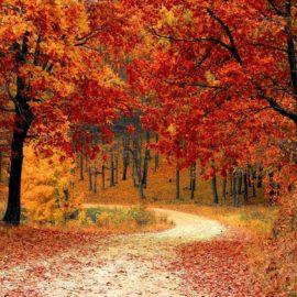 Terras, oprit of een pad aanleggen