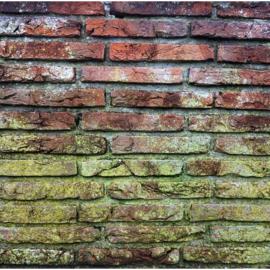 Wat te doen tegen schimmel op de muren en plafonds?